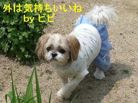 bibi_20080427_1