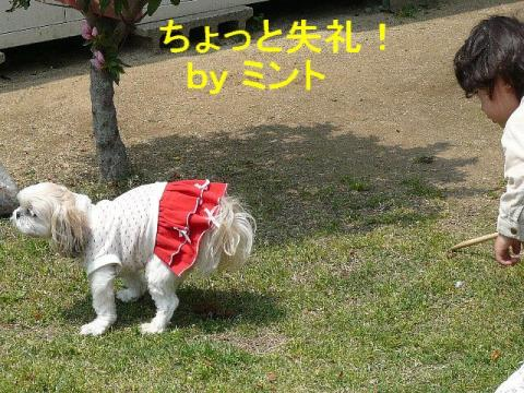 mint_20080427_1