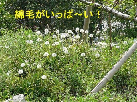 hana_20080427_1
