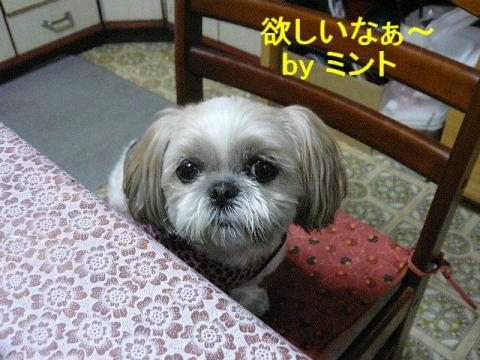 mint_20080508_2