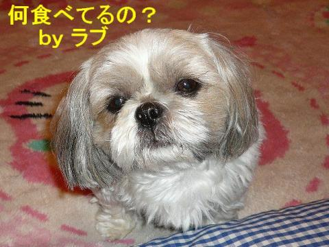 love_20080510_4