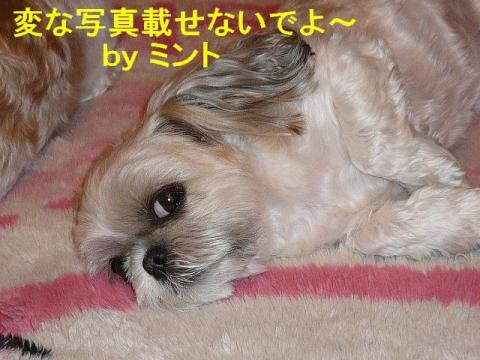 mint_20080510_2