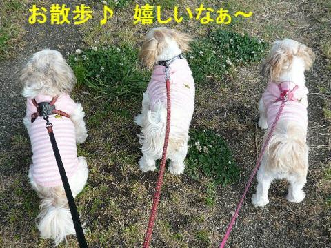 oyako_20080511_1