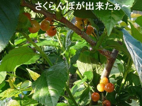 hana_20080511_1