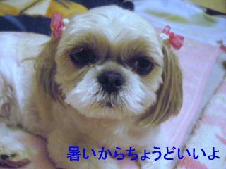 MINT_20060621_2