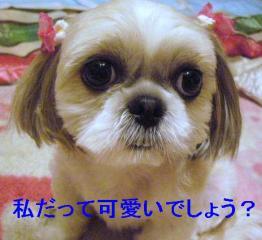 mint_20060623_1
