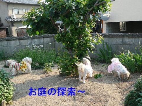 oyako_20080519_1