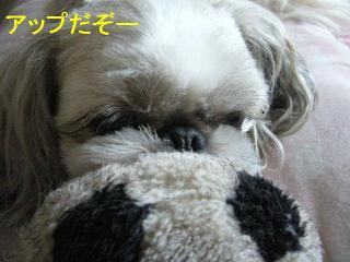 love_20060626_1