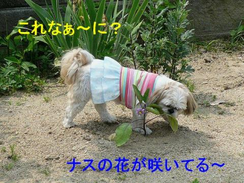 mint_20080519_1