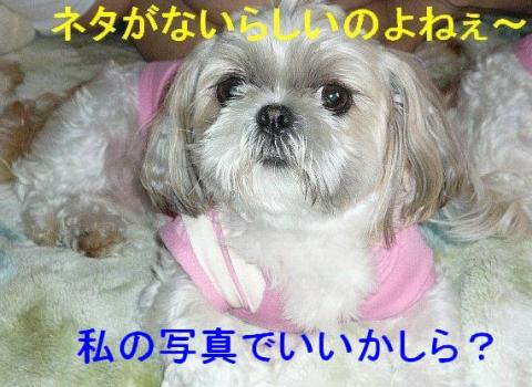 mint_20080528_1