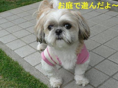 mint_20080526_2