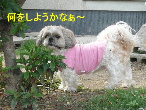 love_20080526_1