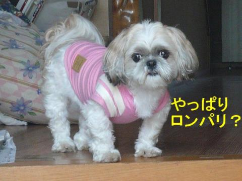 mint_20080526_3