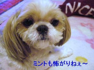 bibi_20060630_2