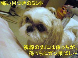 mint_20060704_1