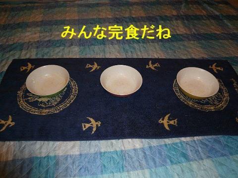 gohan_20080531_2