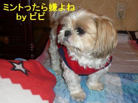 bibi_20080531_2
