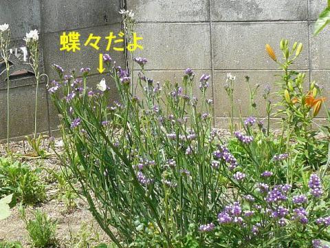 hana_20080602_1