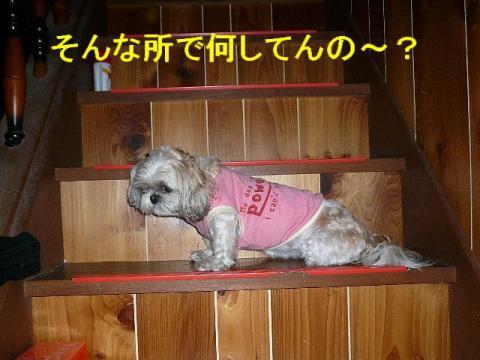 mint_20080601_1