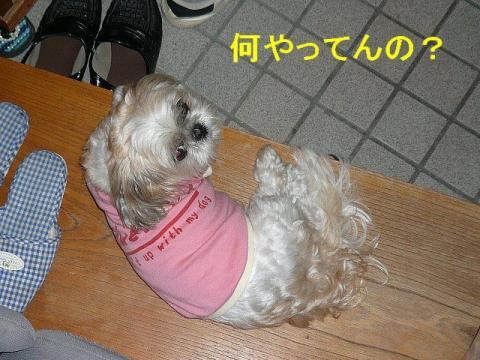 mint_20080601_6