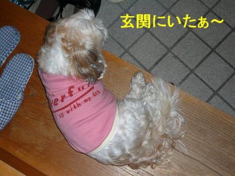 mint_20080601_7