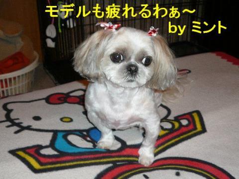 mint_20080603_2