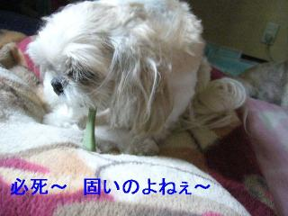 MINT_20060709_2