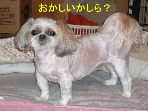 mint_20080604_3