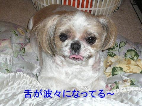 bibi_20080605_3