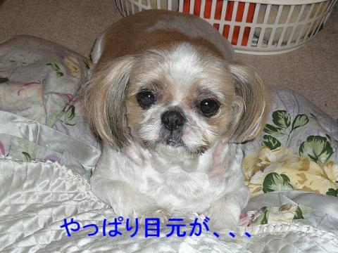 bibi_20080605_2