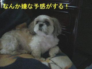 mint_20060716_1