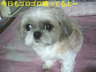 mint_20060716_2