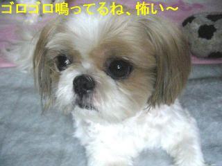 bibi_20060716_1