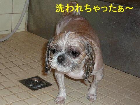 mint_20080614_3