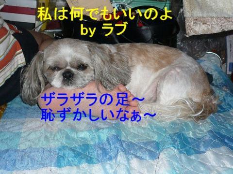 love_20080616_1