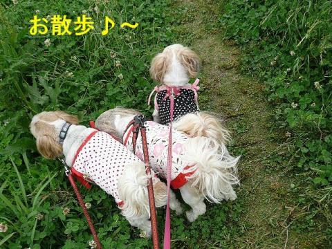 oyako_20080615_1