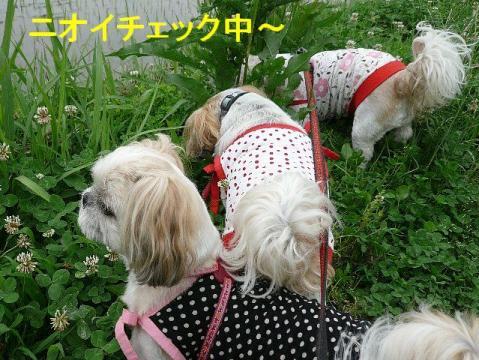 oyako_20080615_2