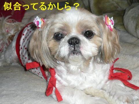 bibi_20080615_2