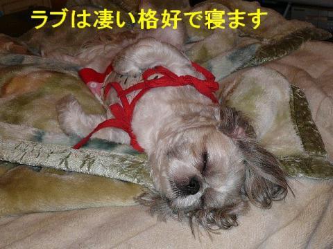 love_20080617_1