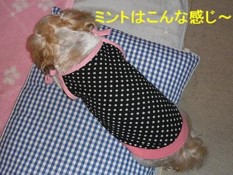 mint_20080617_1