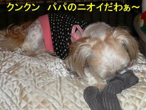 mint_20080618_1