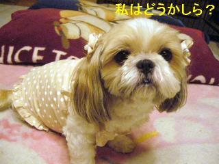 bibi_20060724_1