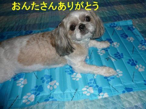 love_20080621_3