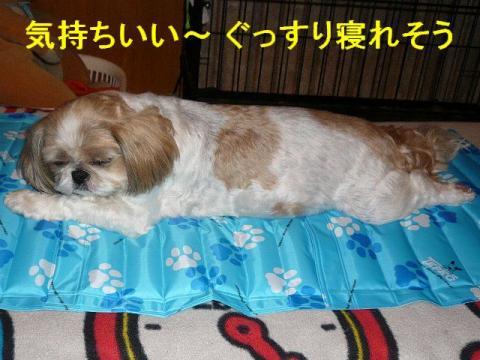 bibi_20080621_2