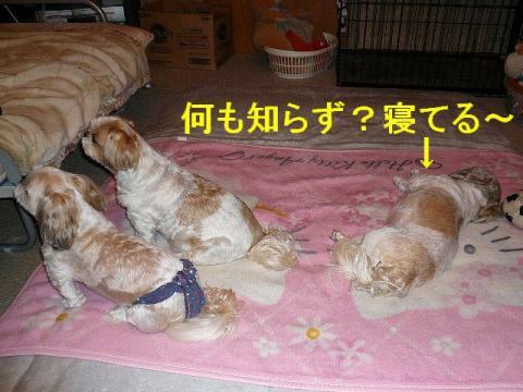 oyako_20080625_1