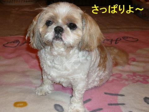 bibi_20080627_1