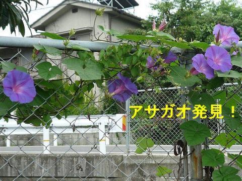 hana_20080628_1