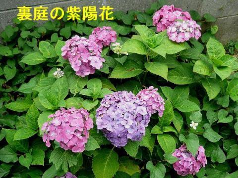 hana_20080628_2