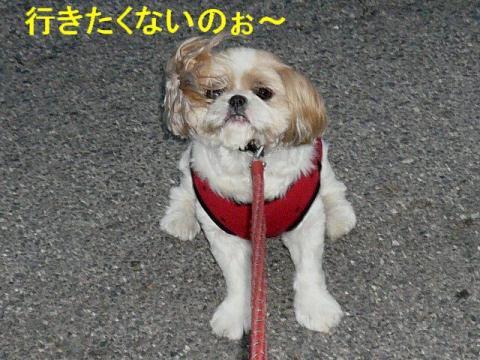 bibi_20080629_1