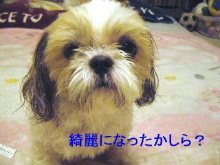 bibi_20060804_2